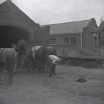 Ellis shoeing a horse outside the Smithy, with the library to the right of the image, now the Village Hall